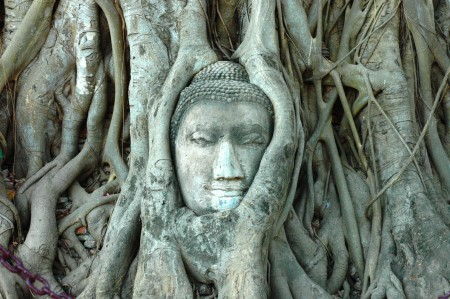 Ayuthya buddha1